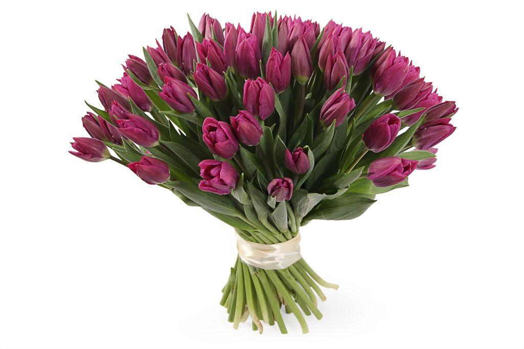 Букет 51 королевский тюльпан, пурпурные фото