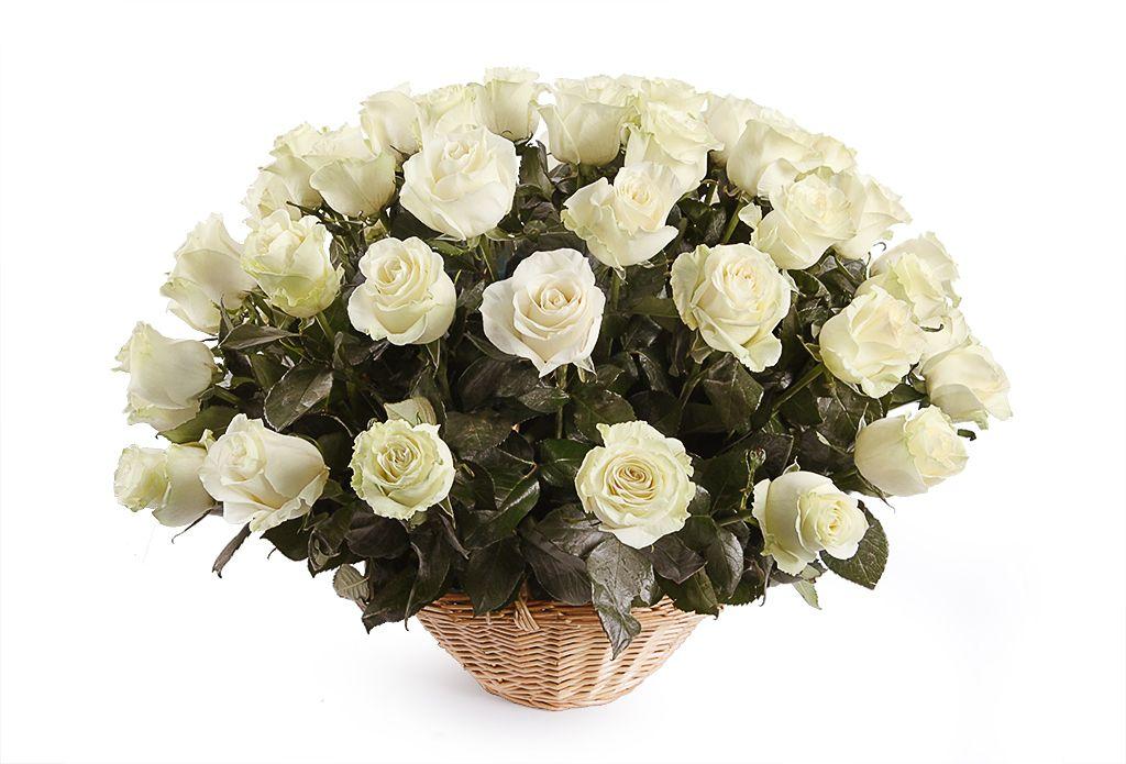 Букет 51 роза Мондиаль в корзине фото