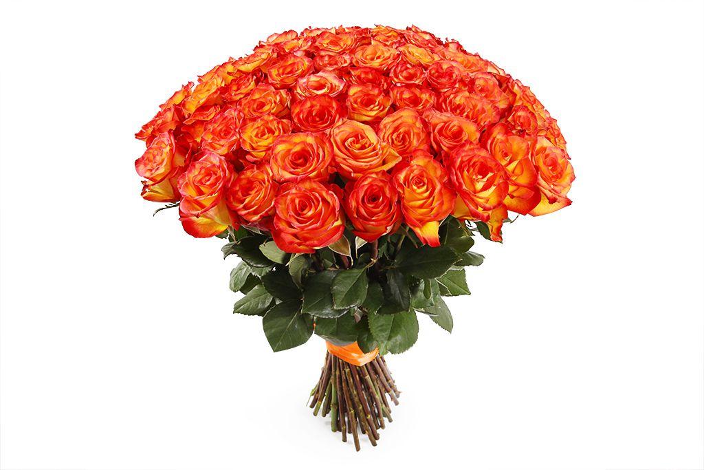 Букет 51 роза Хай Мэджик фото