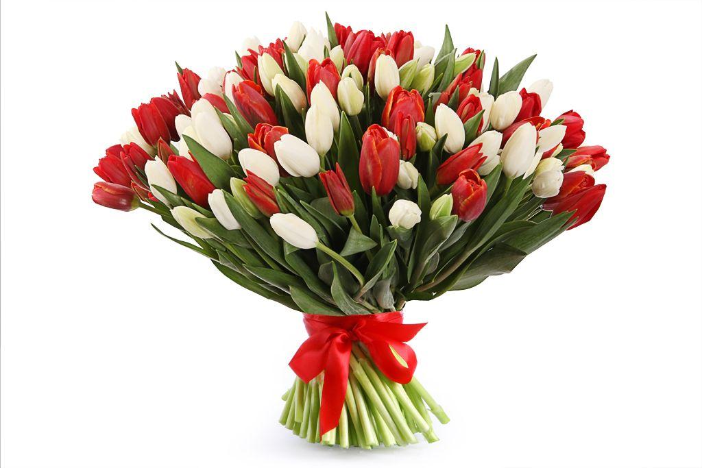 Букет 101 тюльпан, красно-белый микс фото