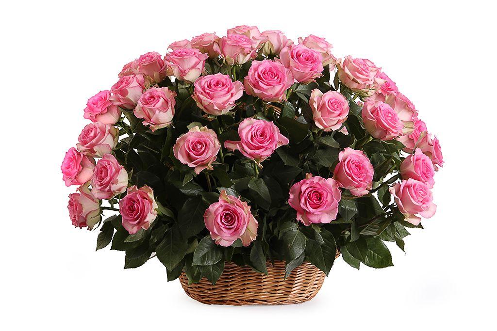 Букет 51 роза Свит Юник в корзине фото